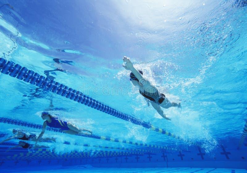 Vrouwelijke zwemmers die in pool zwemmen stock fotografie