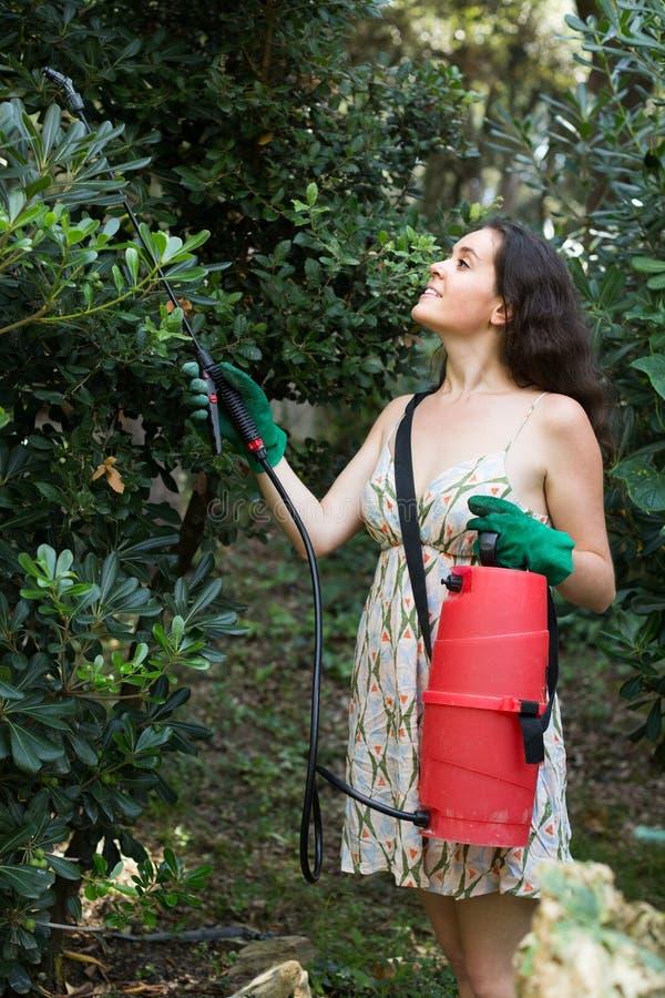 Vrouwen bespuitende boom in boomgaard stock foto's