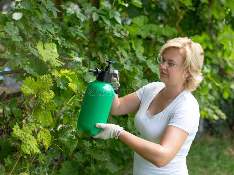 Vrouwen bespuitende wijngaard door pesticide in openlucht royalty-vrije stock foto's