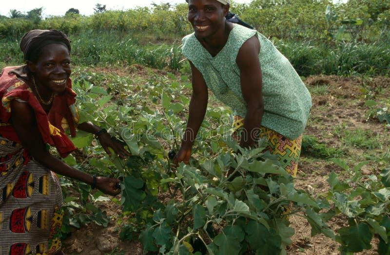 Vrouwen die aan een landbouwbedrijf, Oeganda werken. stock foto