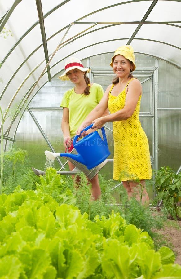 Vrouwen die groenten water geven stock afbeeldingen