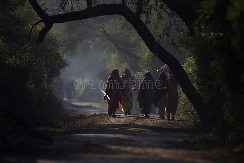 Vrouwen die voor dagelijkse karweien, Bezinning, het Nationale Park van Keoladeo Ghana, Bharatpur, Rajasthan, India gaan royalty-vrije stock foto's