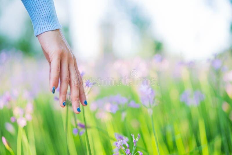 Vrouwen en bloemen op het gebied de vrouwen overhandigen wat betreft de purpere bloem met exemplaarruimte royalty-vrije stock afbeeldingen
