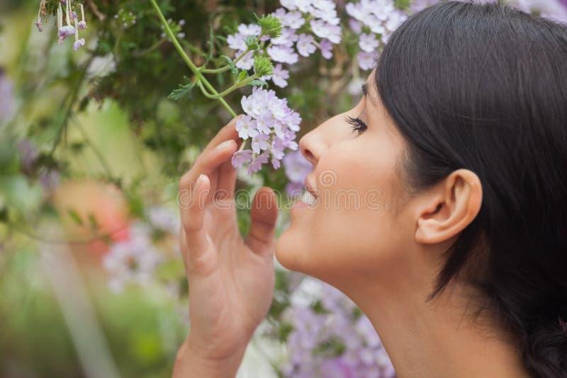Vrouwen ruikende bloem stock afbeeldingen