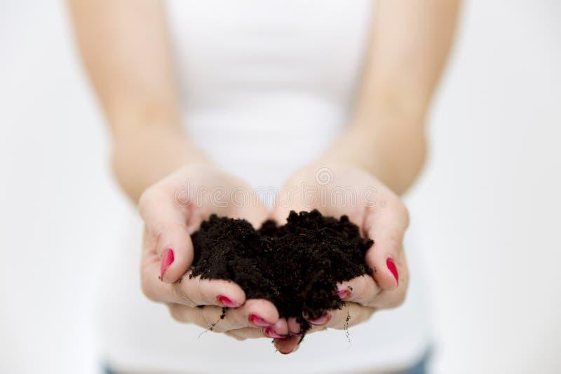 Vrouwen` s handen die groene kleine installatie in grond houden Het concept van de groei Het concept van de aard stock fotografie