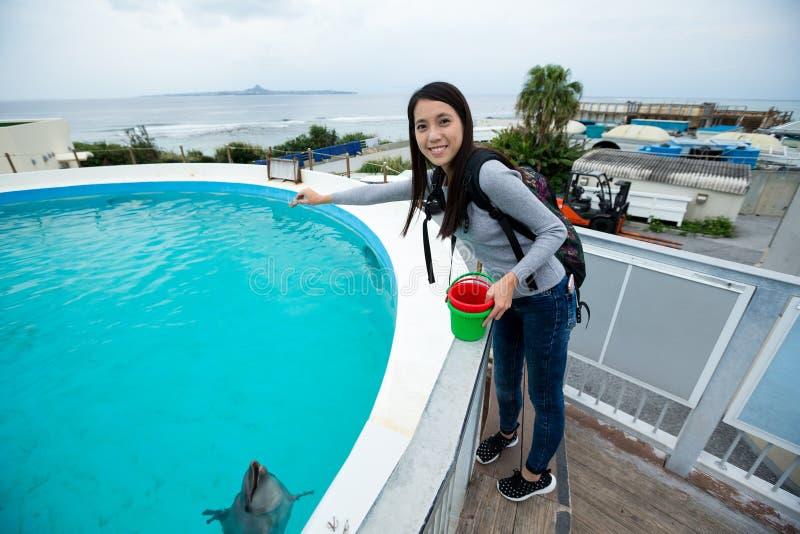 Vrouwen voedende dolfijn in aquarium stock afbeeldingen