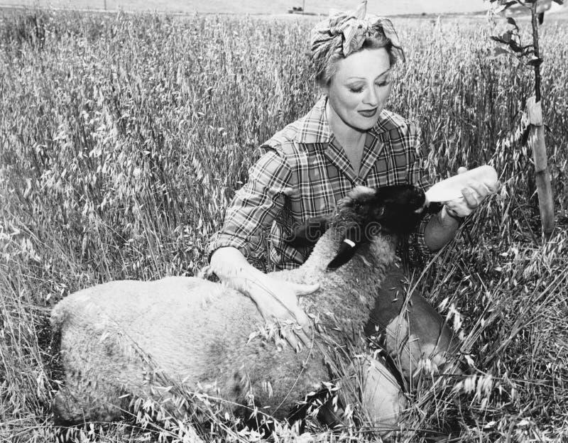 Vrouwen voedende schapen met fles (Alle afgeschilderde personen leven niet langer en geen landgoed bestaat Leveranciersgaranties  royalty-vrije stock afbeelding