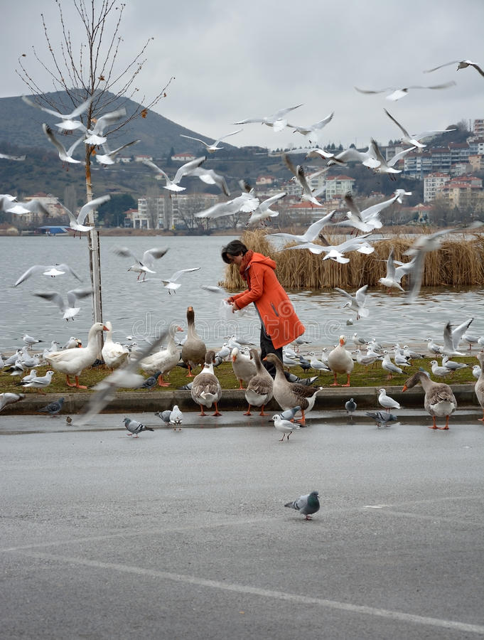 Vrouwen voedende vogels stock foto's