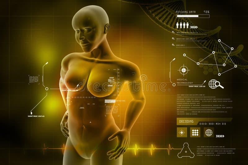 Vrouwen vrouwelijk menselijk lichaam stock illustratie
