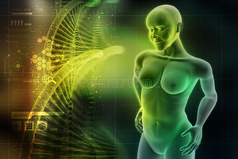 Vrouwen vrouwelijk menselijk lichaam royalty-vrije illustratie