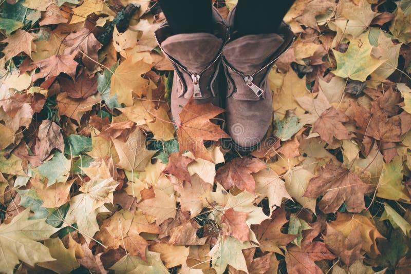 Vrouwenbenen in bruine schoenen tegen de achtergrond van de herfstbladeren stock foto's