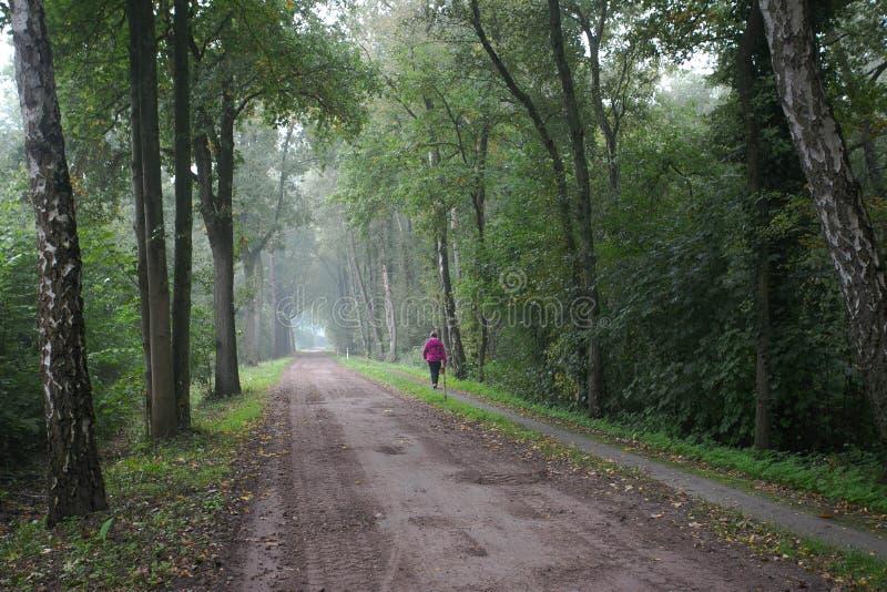 Vrouwengangen in het groene bos royalty-vrije stock foto's