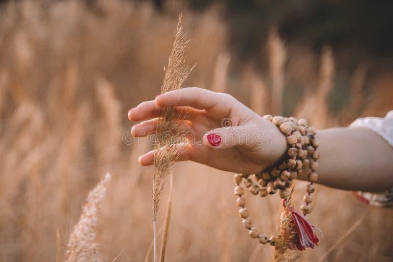 Vrouwenhand die tarwegebied doornemen De hand van het meisje wat betreft de gele close-up van tarweoren Het concept van de oogst  stock foto