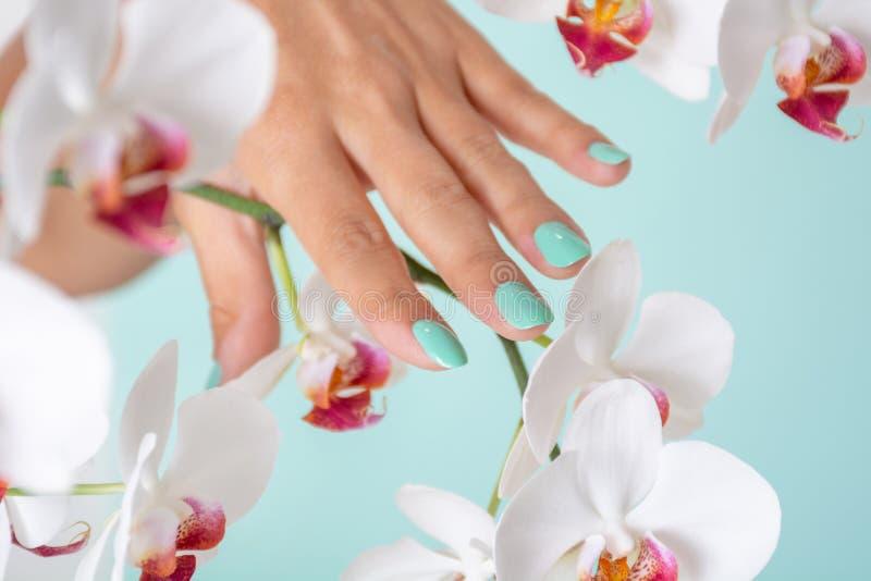 Vrouwenhand met een turkooise kleurenmanicure op spijkers en witte die orchideeënbloem op zachte blauwe achtergrond in studio wor royalty-vrije stock foto