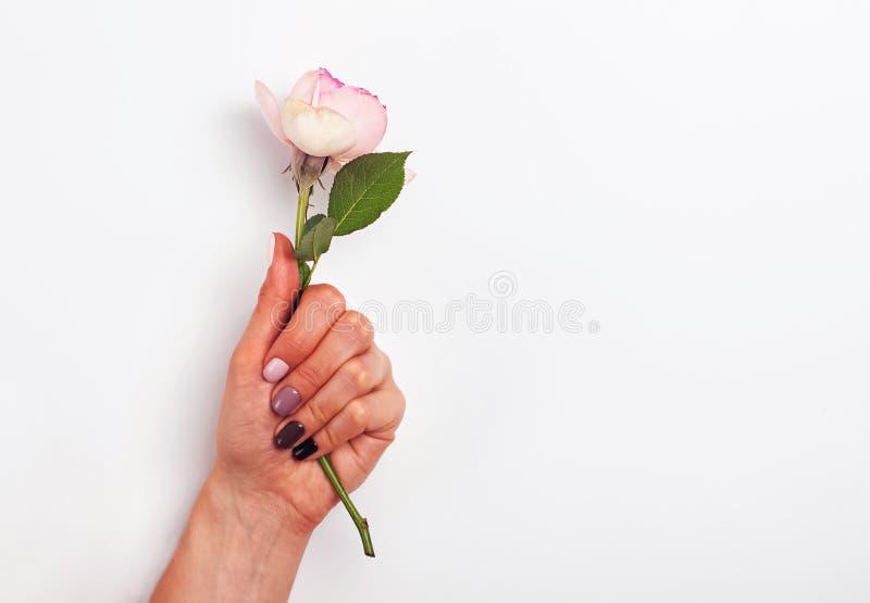 Vrouwenhand met mooie manicure die een bloem op de witte achtergrond houden royalty-vrije stock afbeeldingen