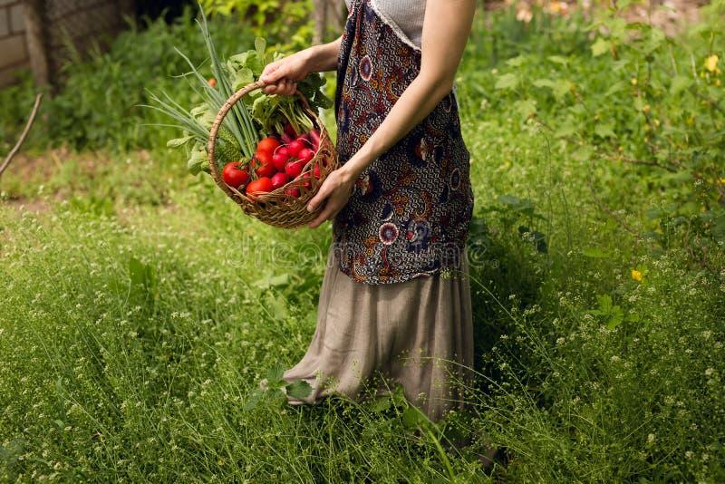 Vrouwenhanden die een mandhoogtepunt van groenten in de tuin houden royalty-vrije stock afbeeldingen