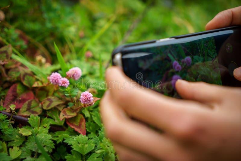 Vrouwenhanden die en slimme telefoon met vage kleurrijk houden met behulp van royalty-vrije stock fotografie