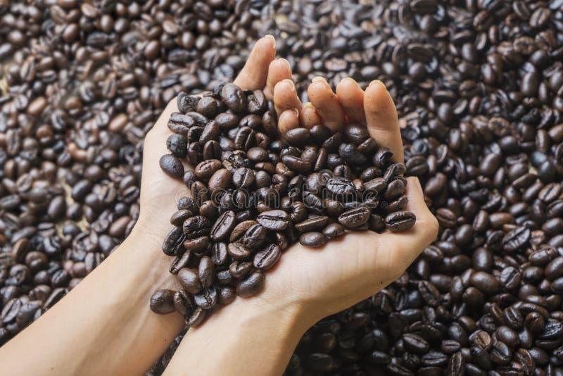Vrouwenhanden die verse geroosterde koffiebonen houden stock foto's