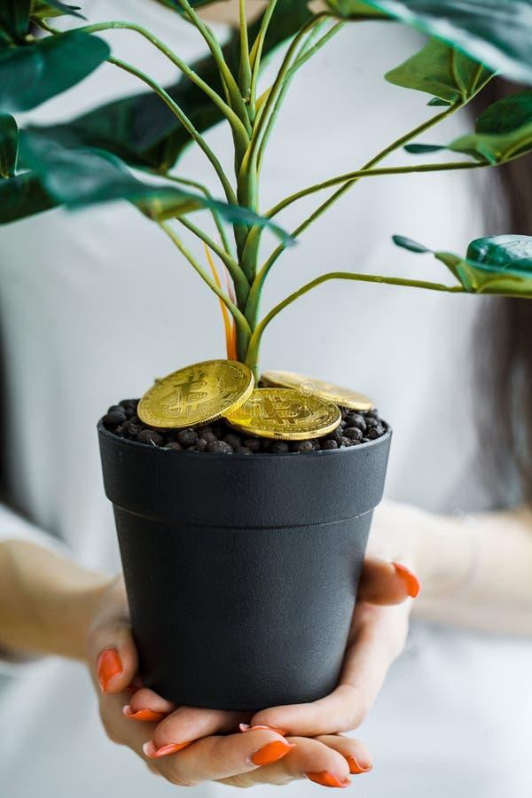 Vrouwenholding, huisinstallatie met muntstukken van bitcoin ter plaatse royalty-vrije stock foto