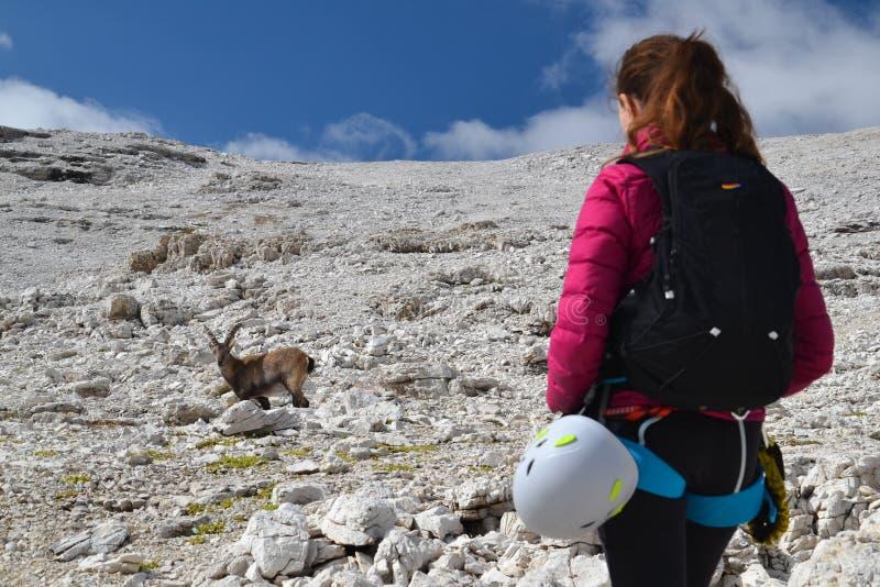 Vrouwenklimmer en steenbok in Dolomiet stock foto's