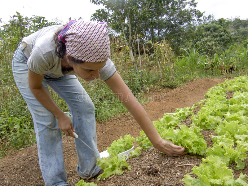 Vrouwenlandbouwer stock fotografie