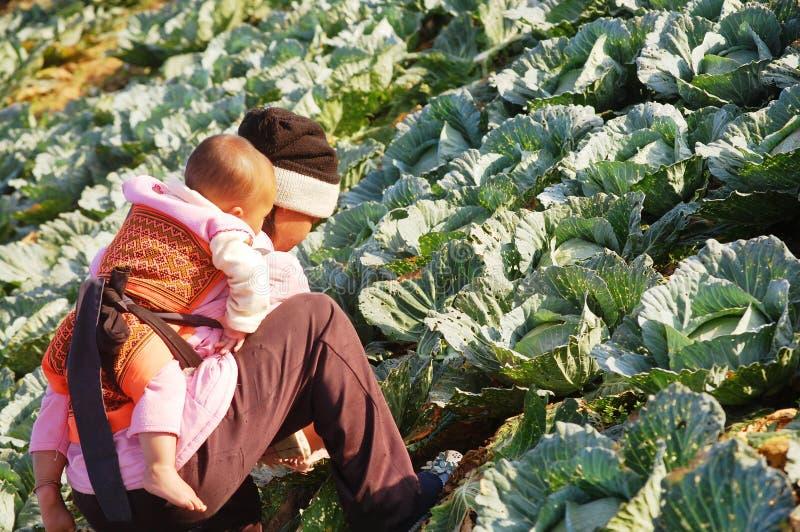 Vrouwenlandbouwer bij Phu-Ton Berk, Petchabun, Thailand stock afbeeldingen
