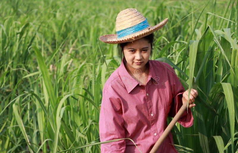 Vrouwenlandbouwer met schoffel het in hand werken in het suikerrietlandbouwbedrijf en het dragen van een strohoed royalty-vrije stock afbeeldingen