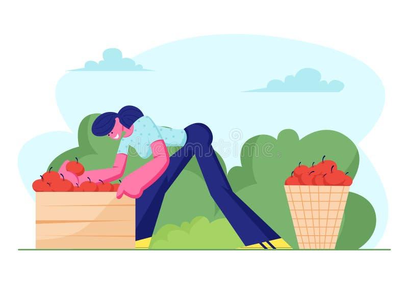 Vrouwenlandbouwer Pick Apple Harvest aan Mand en Doos in Boomgaard De Vruchten van tuinmancharacter harvesting ripe in Ecologisch royalty-vrije illustratie