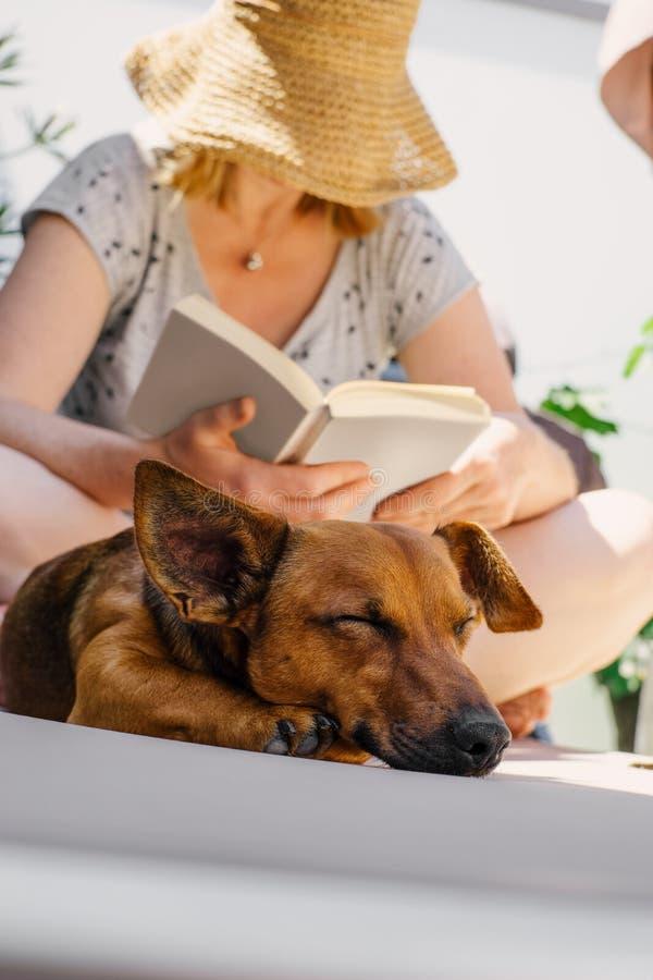 Vrouwenlezing in haar boek op een hete de zomerdag terwijl haar vermoeide hond op een ligstoel slaapt stock afbeeldingen