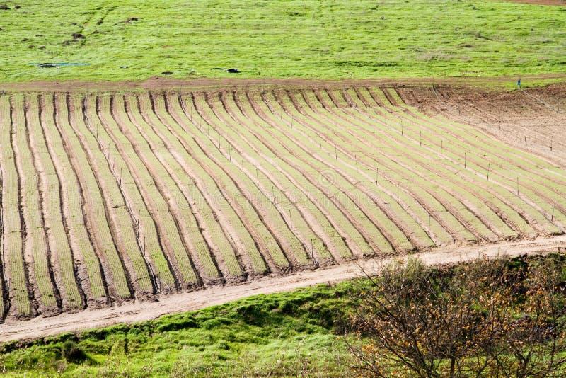 Vruchtbaar geploegd landbouwbedrijfland stock foto's