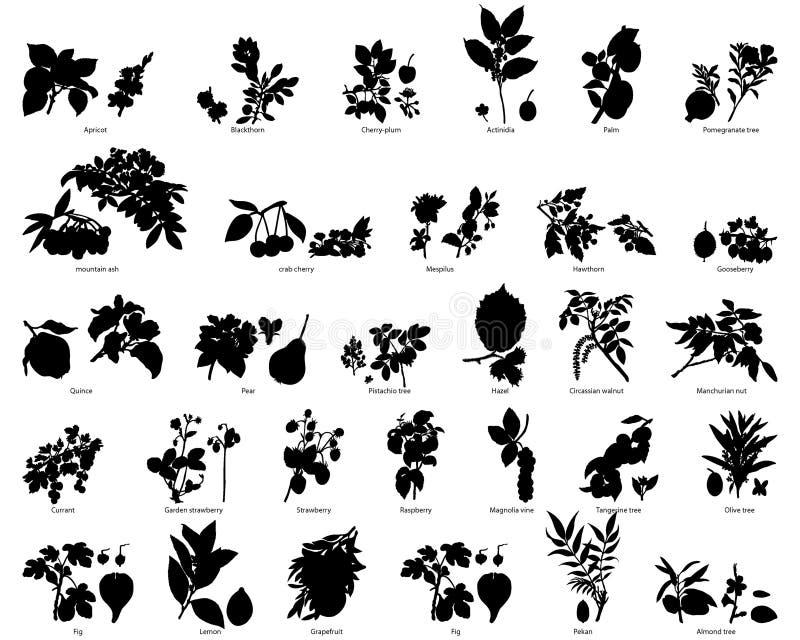 Vruchten en bessen vector illustratie