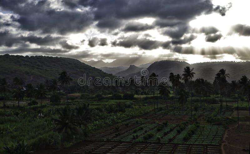 Vruchten en groentenaanplantingen op Kaapverdië stock afbeelding