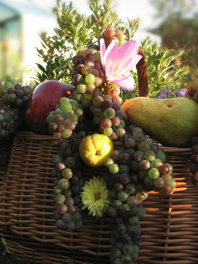 Vruchten in mand royalty-vrije stock foto's