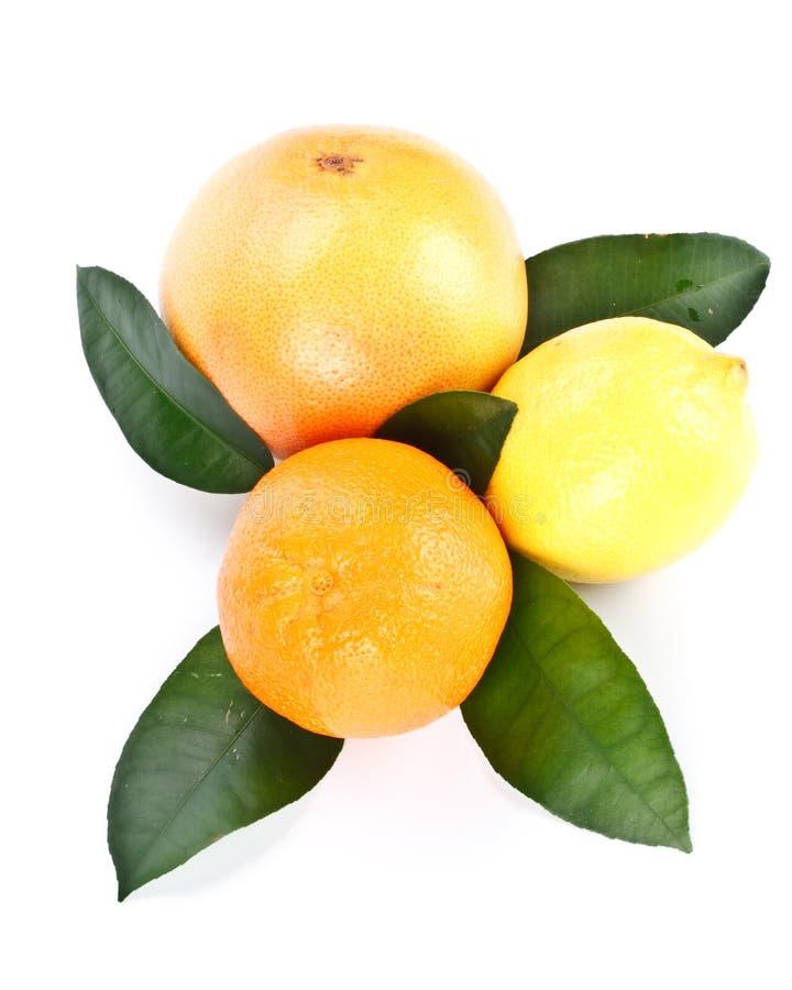 Vruchten met groene bladeren royalty-vrije stock afbeelding