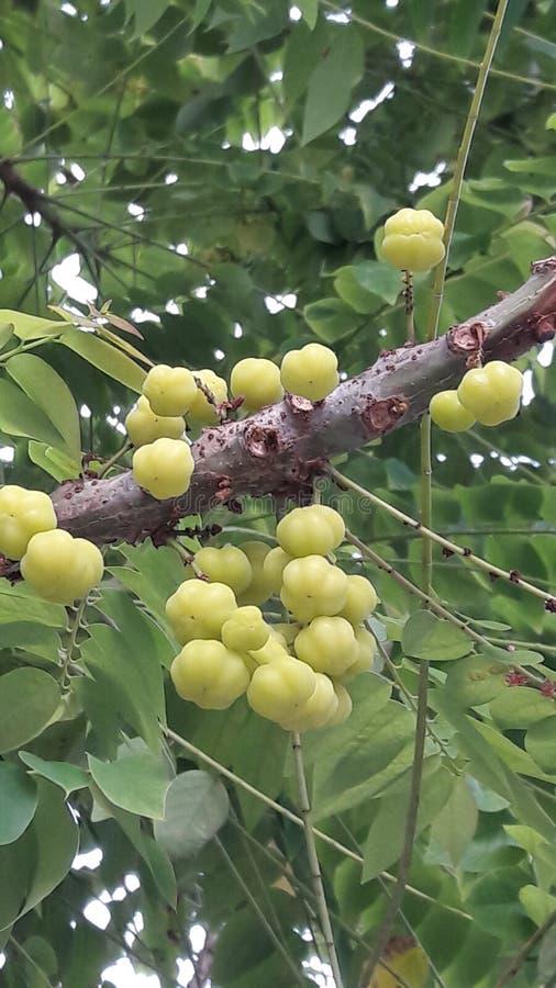 Vruchten met hoge vitamine Cinhoud royalty-vrije stock fotografie