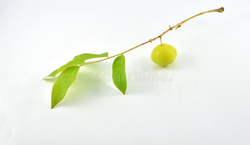 Vruchten met hoge vitamine Cinhoud stock foto