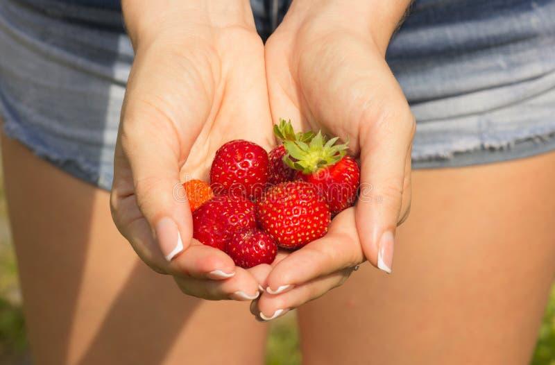 Vruchten van aardbeien in de dames` handen royalty-vrije stock afbeelding