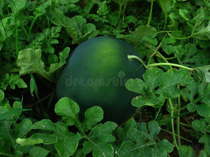 Vruchten van de Tuin stock fotografie