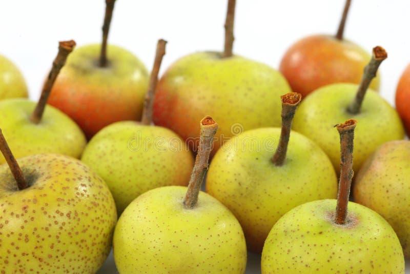 Vruchten van Malus Pumila royalty-vrije stock fotografie
