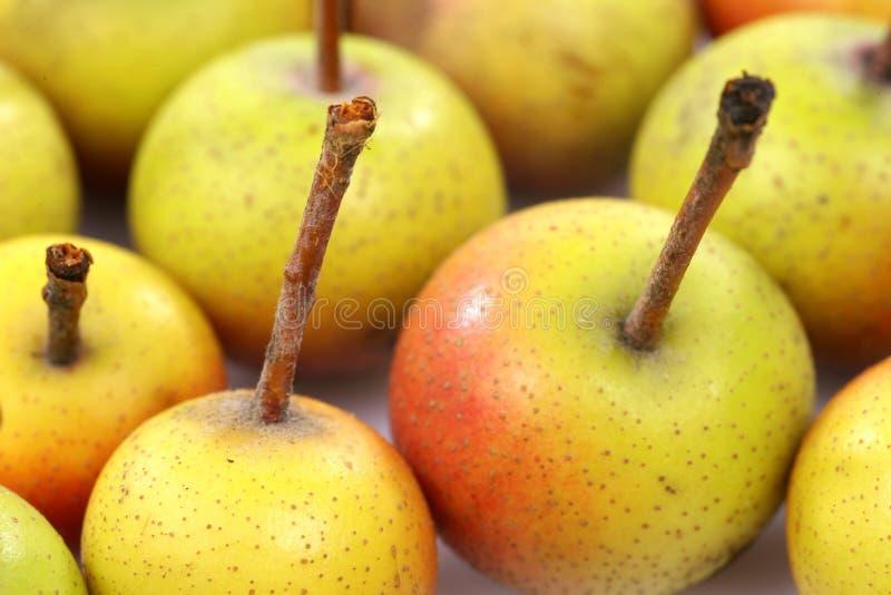 Vruchten van Malus Pumila royalty-vrije stock foto's