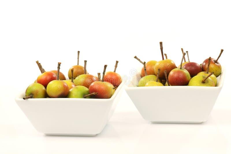 Vruchten van Malus Pumila stock afbeeldingen