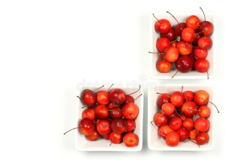 Vruchten van Malus Pumila (krabappel) royalty-vrije stock fotografie