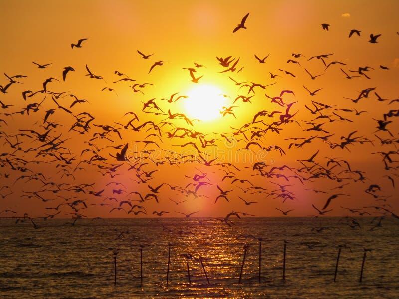 Vue à couper le souffle des mouettes incomptables de vol contre le matin d'or Sun au-dessus de la mer photos libres de droits