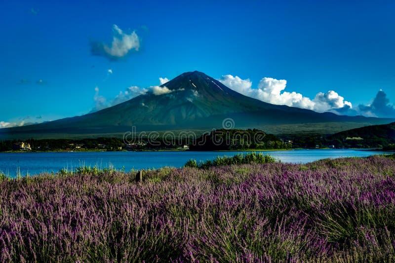Vue à la lavande du mont Fuji en été avec le ciel bleu et les nuages W photos stock