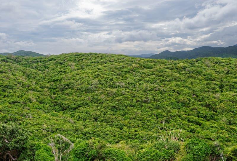 Vue à partir du dessus sur la forêt tropicale photos libres de droits