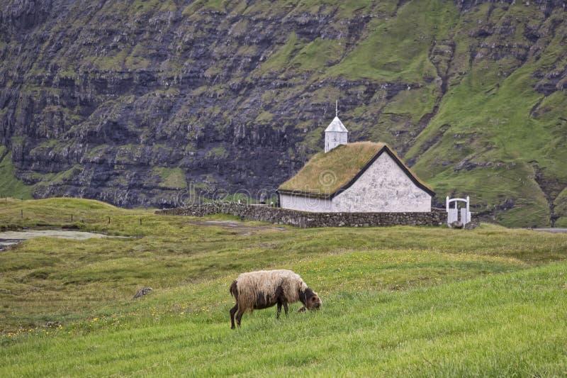 Vue à un mouton et à une petite église, les Iles Féroé images libres de droits
