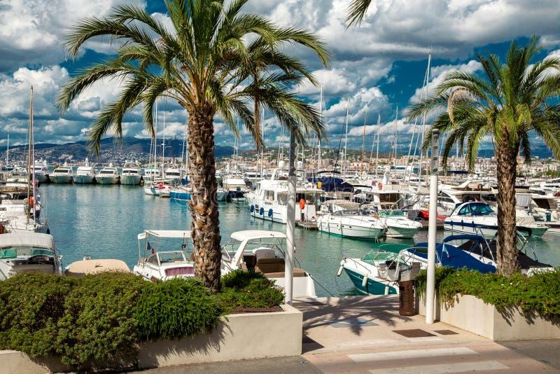 Vue étonnante de la ville de Cannes, France, palmiers, yachts photographie stock libre de droits