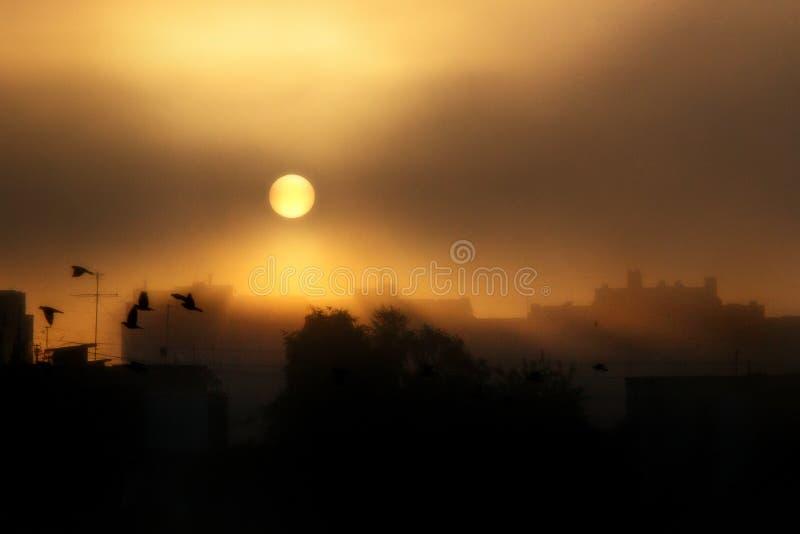 Vue étonnante de lever de soleil au-dessus des bâtiments de ville et des oiseaux de vol dedans image libre de droits