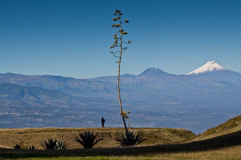 Vue étonnante de volcan du Cotopaxi, Equateur photo stock