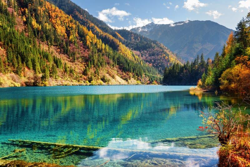 Vue étonnante du lac en bambou arrow parmi des bois d'automne images libres de droits